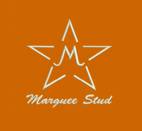 Marquee Stud